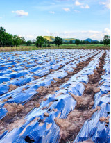 Agricultural Films Market by Application, Raw Material, and Geography - Forecast and Analysis 2021-2025