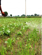 Agricultural Pesticides Market by Type and Geography - Forecast and Analysis 2021-2025