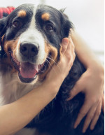 Companion Animal Specialty Drugs Market by Product and Geography - Forecast and Analysis 2021-2025