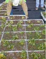 Green-Roofs Market by Product, Geography, and Application - Forecast and Analysis 2020-2024